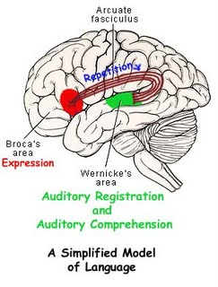What is the role of broca area - Essay Example