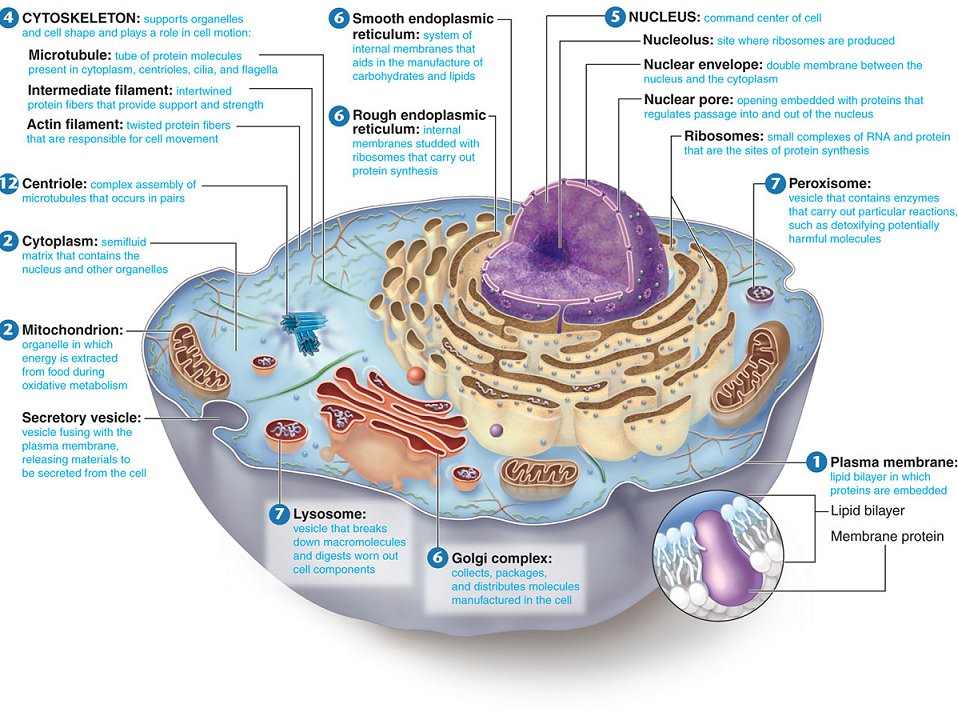 Cell Structure And Functions The Truth About Self I Am Consciousness