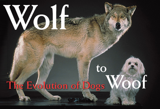 SPIRITUALISM - WOLF TO DOG EVOLUTION: The problem with the Theory of Evolution is its speculative nature. We have to establish valid, scientific principles that establish the existence of living things in Nature.