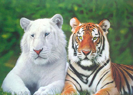 Whole Dude-Whole Colors: What is Color? The problem of Albinism helps in the understanding of the purpose of Biological Coloration. The Tiger with stripes and color has a better ability to conceal itself from its prey before attacking the unsuspecting prey.