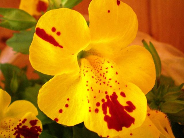 WholeDude - Whole Artist : Chilean Mimulus flowers. Mimulus luteus. Who is the artist that caused this visual effect?