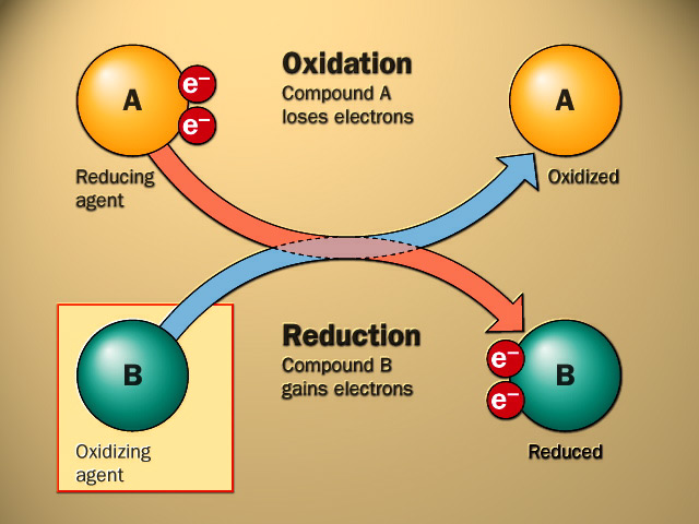 WholeDude - WholeDesigner - Matter and Spirit: Many important biological processes involve Redox or Oxidation and Reduction Chemical Reactions. These chemical reactions reveal a dynamic process that is the characteristic of both Life and Death. If Life is explained by a series of chemical reactions, the same process continues into Death.