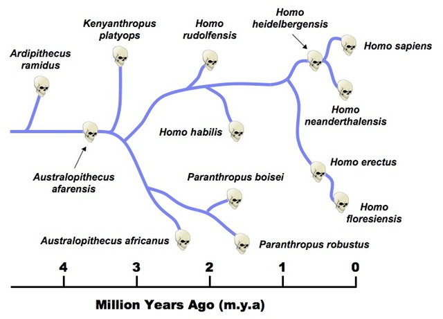 SPIRITUALITY SCIENCE - THE HUMAN SPECIES: DARWIN'S THEORY OF EVOLUTION HAS TO EXPLAIN THE NATURAL BASIS OR MECHANISM OF THE ORIGIN OF THE HUMAN SPECIES.