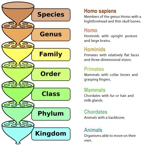 Kingdom Classification of Living Organism