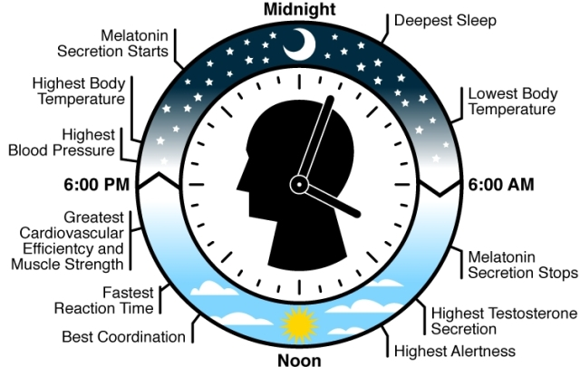 SPIRITUALITY SCIENCE - AGING AN ETERNAL LAW: HUMAN EXISTENCE IS SYNCHRONIZED WITH DAILY CHANGES IN THE EXTERNAL ENVIRONMENT IN RESPONSE TO DAYLIGHT OR DARK.