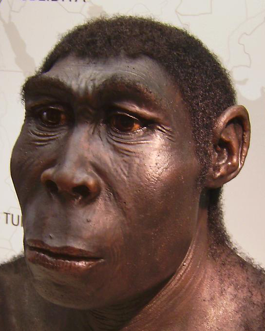 SPIRITUALITY SCIENCE - THE ORIGIN OF HUMAN SPECIES: A REPLICA OF HOMINID, HOMO ERECTUS FROM AFRICA.
