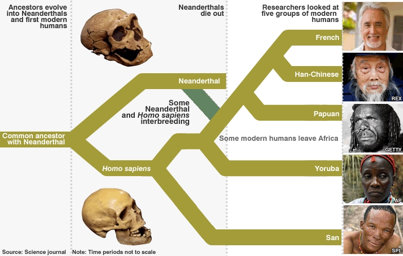 Neanderthal And Denisovan