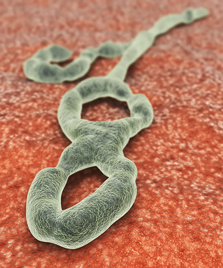 EBOLA OUTBREAK - THE US RESPONSIBILITY: THE VIRUS GENOME IS MADE PUBLIC AND SCIENTISTS TRY TO STUDY THE VIRUS AND CONDUCT RESEARCH TO DISCOVER VACCINE OR TO DESIGN THERAPEUTIC AGENTS THAT CAN DISRUPT THE ABILITY OF VIRUS TO REPLICATE IN INFECTED HUMANS. A VARIETY OF ANIMALS ARE USED IN SUCH STUDIES.