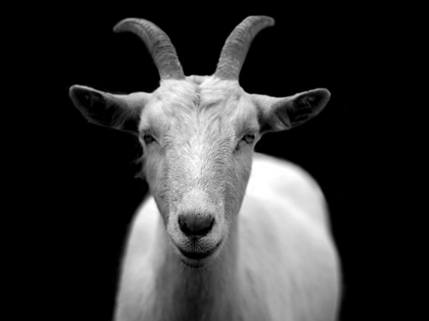 SCAPEGOAT SERVICE - WHOLE TEAM - WHOLE REWARD: SCAPEGOAT IS A LEGITIMATE SIN REMOVAL AND SIN DISPOSAL SERVICE THAT IS CURRENTLY OFFERED ONLY TO WHOLE TEAM MEMBERS AS A WHOLE REWARD OF THEIR WHOLE LABOR.