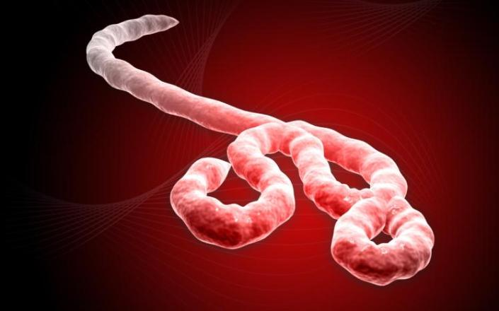 spirituality science ebola virus