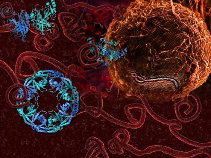 spirituality science fighting ebola virus