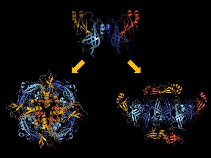 spirituality science vp40 ebola virus