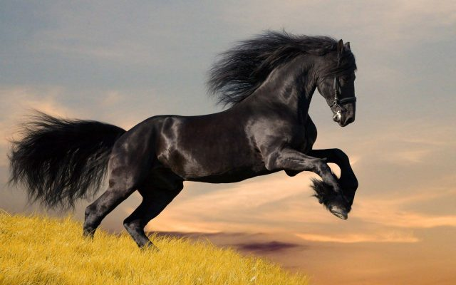 THE ART OF SPIRITUAL LIVING : IT IS THE ART OF MASTERY OF MIND. THE UNBRIDLED, WILD HORSE SYMBOLIZES THE PROBLEM CALLED 'DESIRE', A CHARACTERISTIC OF HUMAN BEHAVIOR AND ACTIONS THAT ARE OBSERVED AS LUST, ANGER, MISERLINESS, GREED, JEALOUSY, AND ARROGANCE. TAMING THIS HORSE IS THE SUBJECT OF OUR STUDY CALLED SPIRITUALITY.