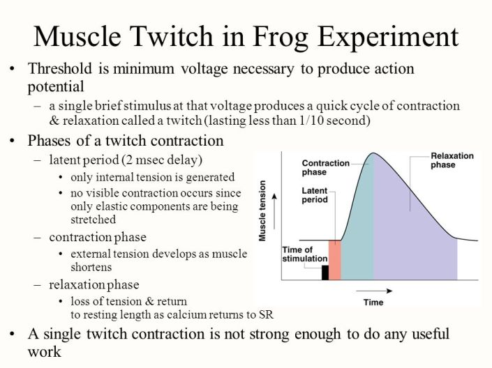 MENDEL'S  LAWS  OF  INHERITANCE  VS  HUMAN  EVOLUTION  :  MUSCLE  TWITCH  IN  FROG  MUSCLE  EXPERIMENT .  MUTATIONS  CANNOT  ACCOUNT  FOR  GUIDED,  SEQUENTIAL,  AND  PURPOSEFUL  NATURE  OF  MUSCLE  CONTRACTIONS  WHICH  HAVE  SEVERAL  CREATIVE  APPLICATIONS  IN  THE  NATURAL  WORLD .