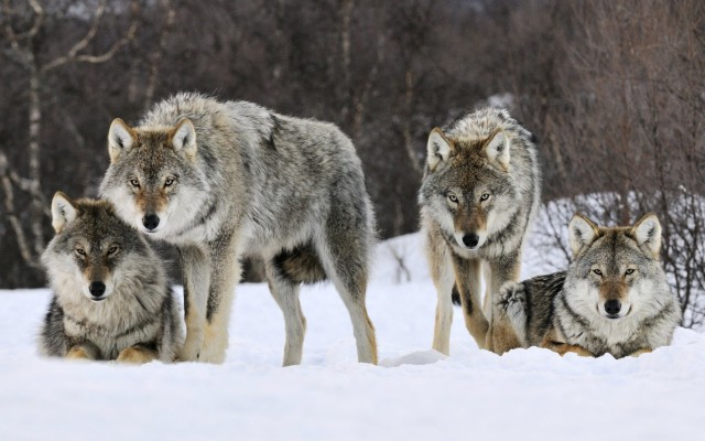 #WHOLEMURPHY - WHOLETEAM - WHOLEAPPRECIATION : LATE NIGHT-SHIFT, OVERNIGHT CREW WORK LIKE A PACK OF WOLVES . VERY FIERCE AND DEVOUR TONS OF LOAD WITH NO MERCY .