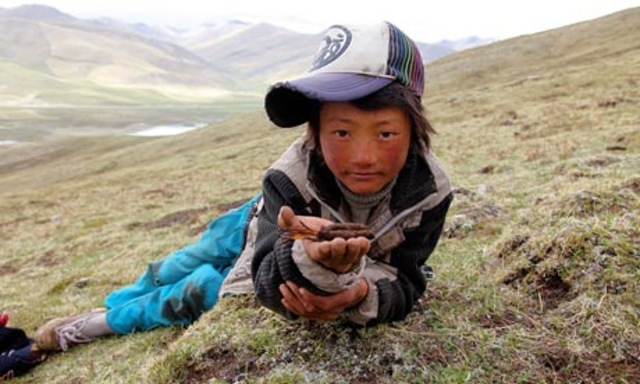 TROUBLE IN TIBET - RED CHINA'S ECONOMIC HEGEMONY. CHINA MANIPULATING TRADITIONAL TIBETAN TRADE AND COMMERCE.
